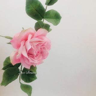 Rosa espiral 🍃