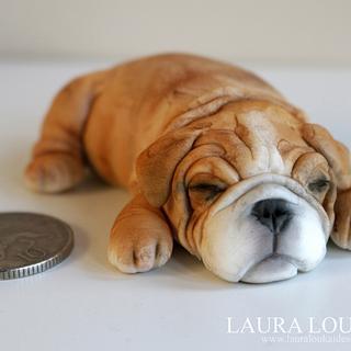 Tiny Bulldog