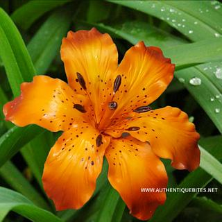 Quarantine Tiger Lily