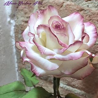 My last rose
