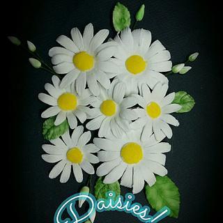 Sugar Paste Daisies