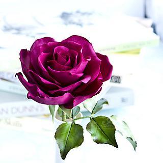 Plummy Rose