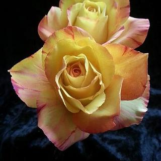 Sugar roses. Variegated colour.