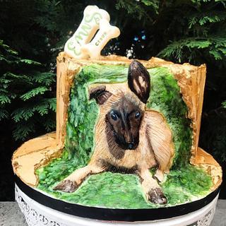 Cake fault line  Belgian Shepherd painted