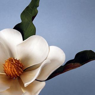 Sugar Paste Magnolia