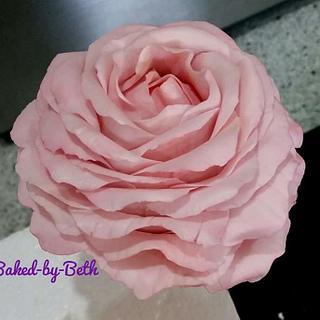 Freeform Rose