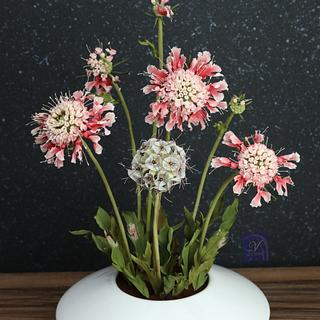 Scabiosa Sugar Flower