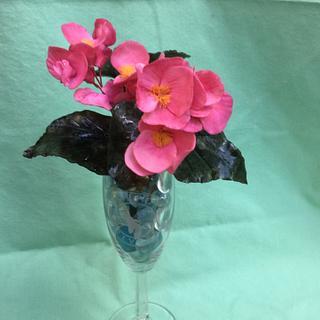 Freeform pink begonia