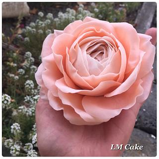 Peach English rose