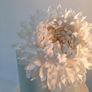 Petals - Cake by Louisa Massignani