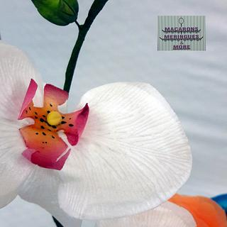 Moth Orchid  (wafer paper )