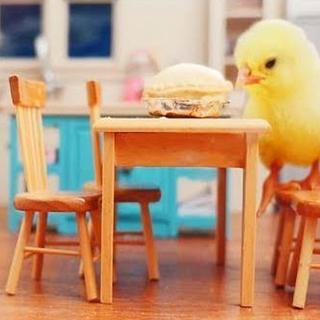 Mini Apple Pie & Mini Dinner Guests 💕