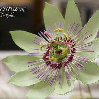 Flor de la Pasión en Pasta de Goma - Passion flower Gumpaste.