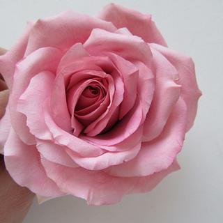 Rose - Cake by Marija Sugarart