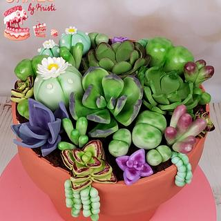 Anhel's Birthday Succulents
