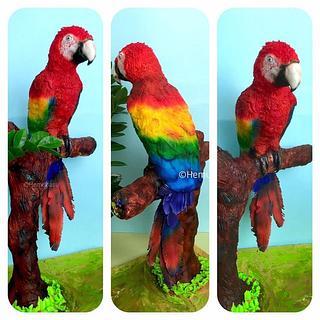 Rainbow Macaw