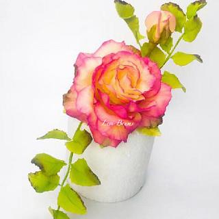 Rose sugar art y