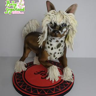 Chinese Crested Dog - Year of the Dog Challenge