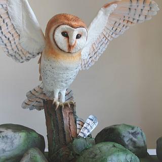 Barn Owl ❤️