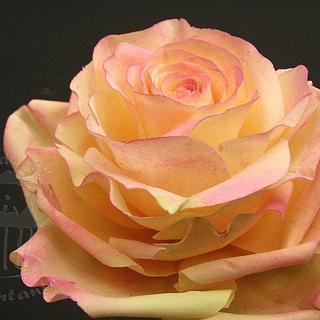 Yellow rose with pink accents