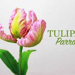 Tulipán Parrot