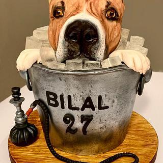 Dog cake!!