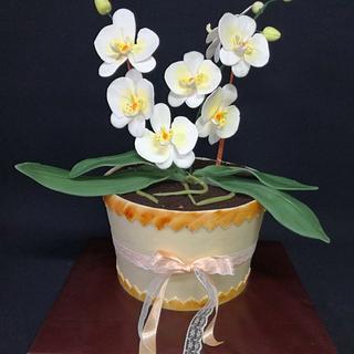 Orchid cake - Cake by MarinaZu Cakes