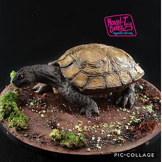 Turtle - Magnificent Bangladesh collaboration