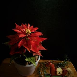 Poinsettia pot
