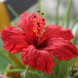 Red Sugar Hibiscus