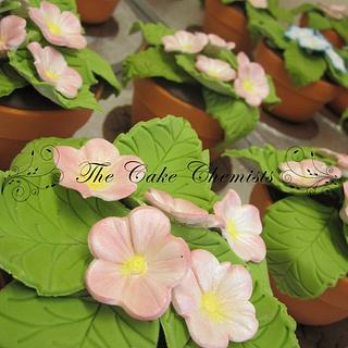 Spring Flowers - Mini Flower Pot Cakes - Cake by The Cake Chemists