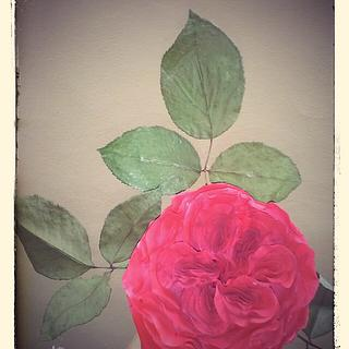 my austin rose - Cake by Cristiana Ginanni