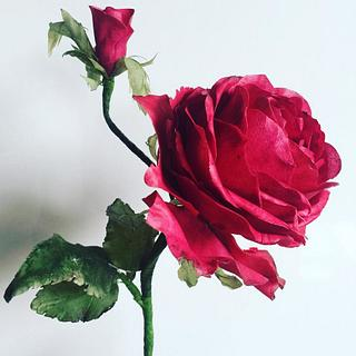 My beautiful Red Rose! - Cake by AmberDoesCakes
