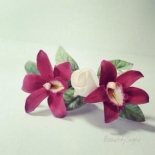 Cymbidium sugar orchids
