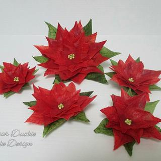 Five poinsettias