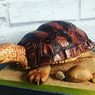 Tiddles the turtle