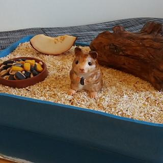 Hamster pet with food