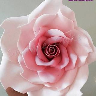 Giant Rose!