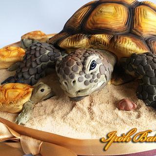 Desert Tortoise Cake