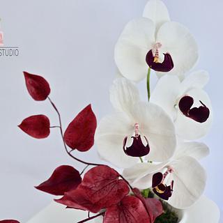 sugar orchid
