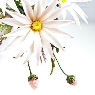 Gumpaste daisies