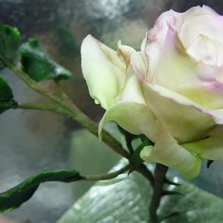 PLATINUM PASTE ROSE .