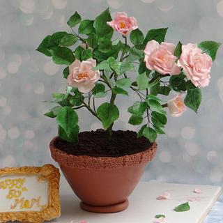 Rose plant Cake