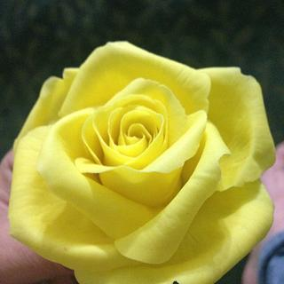Yellow Sugar Rose