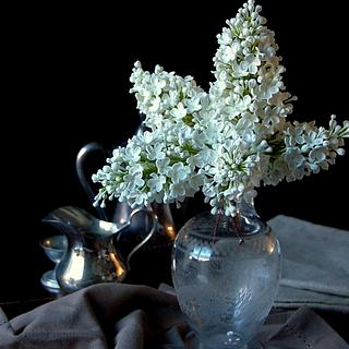 White sugar lilacs
