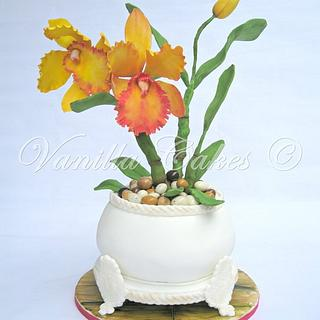 Potted Cattleya