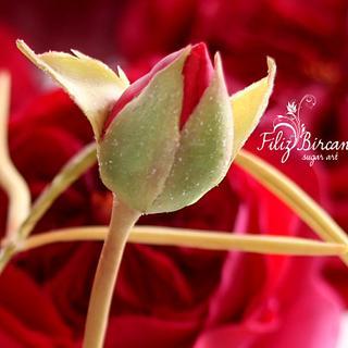 Sugar Rose Bud