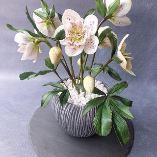 Hellebores - Cake International Silver Award