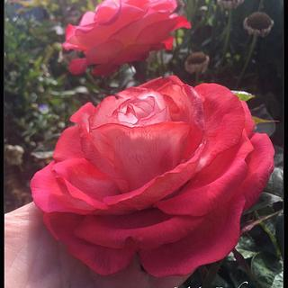 Nostalgia sugar rose
