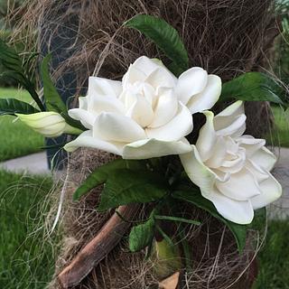 Gardenia tree 😜